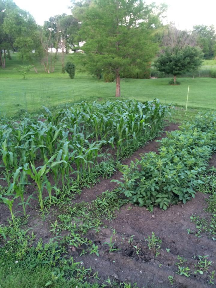Garden Growing